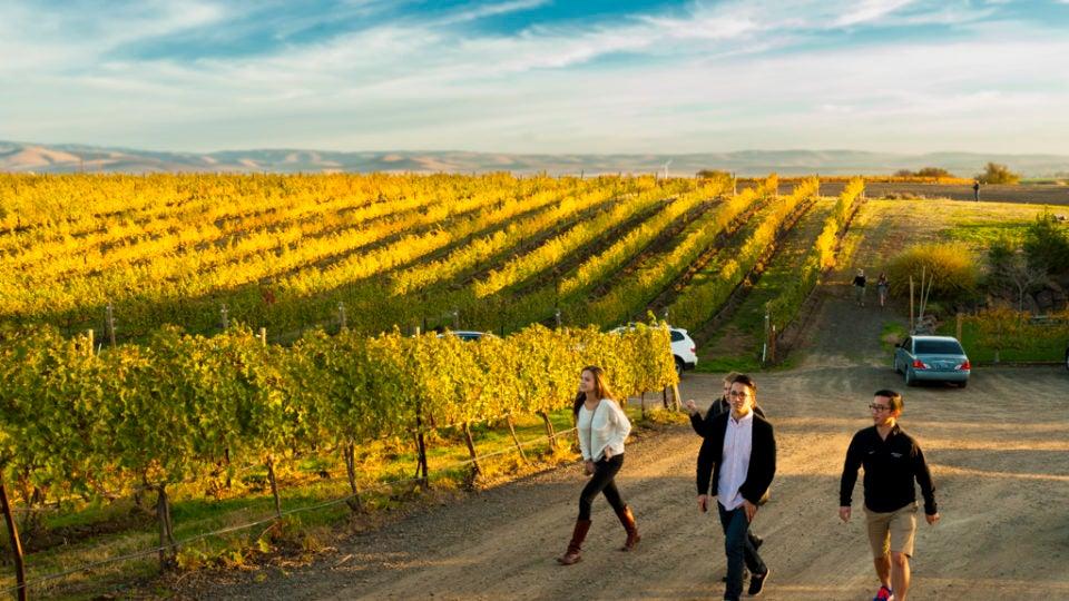Group of People Walking in Autumn Vineyard