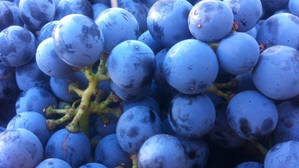 Successful Harvest wraps up in Walla Walla Valley